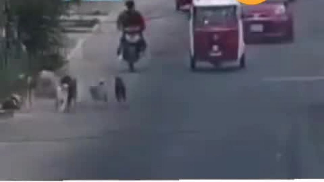 A Dog Caused Accident