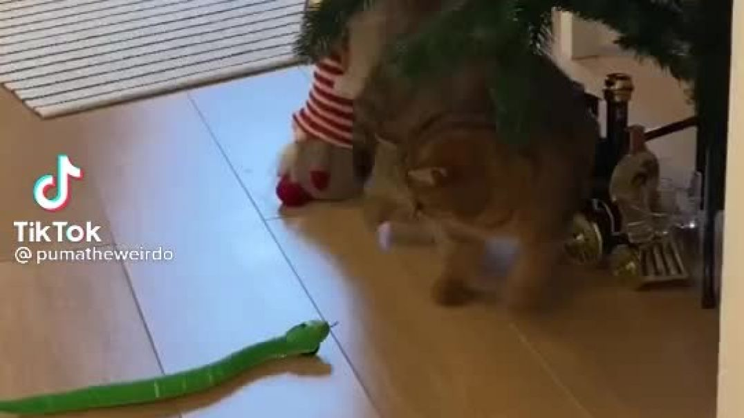 Funny Cat Will Make You Laugh