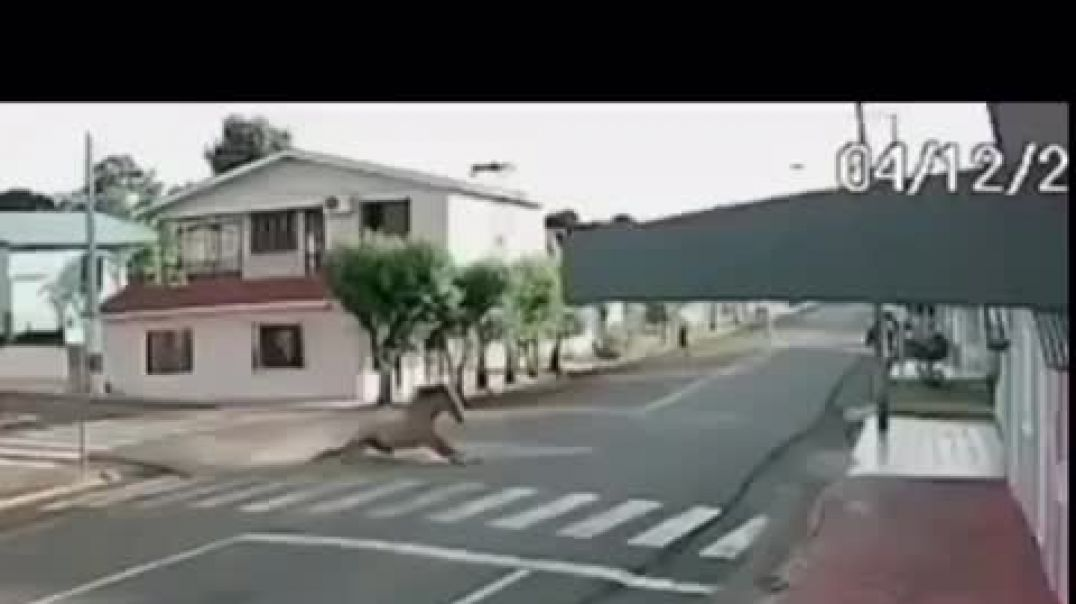 Speedy Horse Bumped Into The Wall