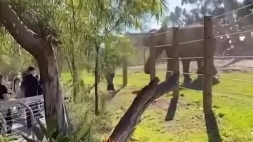 Man Endangered His Son By Going Into An Elephant Habitat