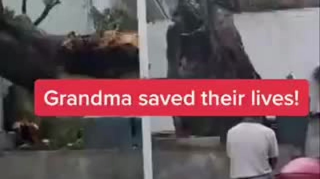 Woman and Kid Nearly Hit By Fallen Big Tree