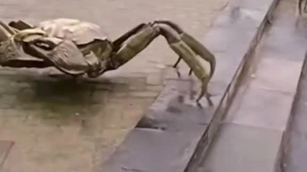 Enormous Crab Climbing The Stairs